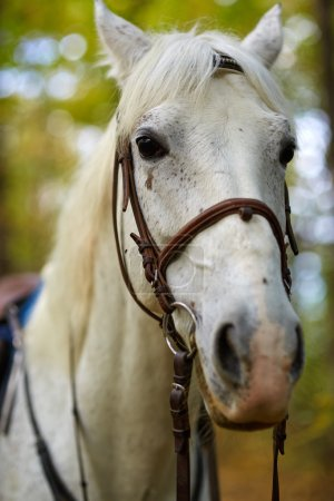 Beautiful  horse in the forest