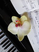 Piano keys with a flower, musical background.