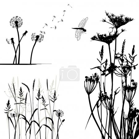 Illustration for Collection for designers, wild plant vector - Royalty Free Image