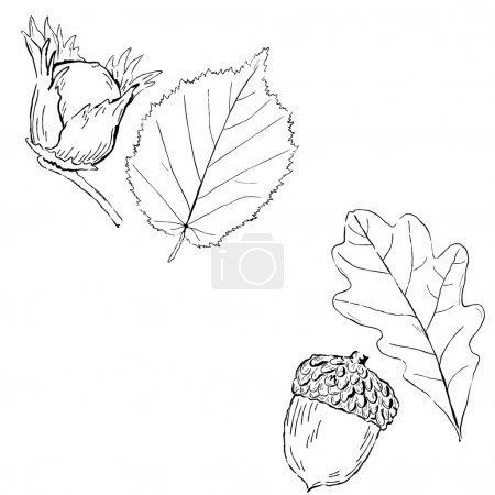 Fruits and leaves of Hazel and oak