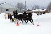 Team von Pferde-Hindernis-Kegel fahren