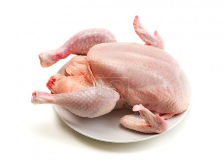 chicken isolate on white