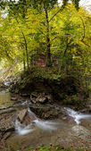 Carpathian mountain river riffle in a forest