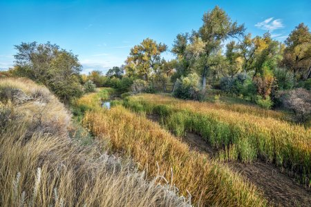 Swamp and riparian forest in eastern Colorado