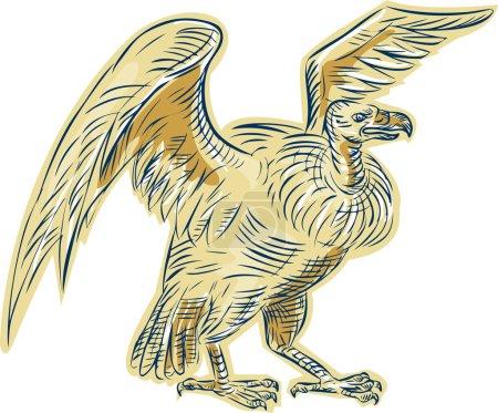 Vulture Buzzard Etching