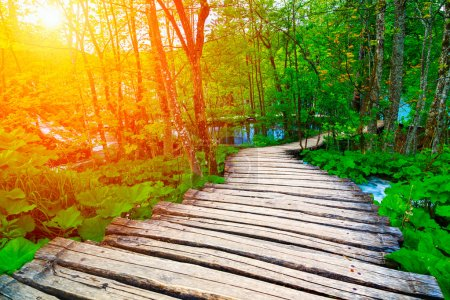 Photo for Summer forest pathway in plitvice national park-Croatia - Royalty Free Image
