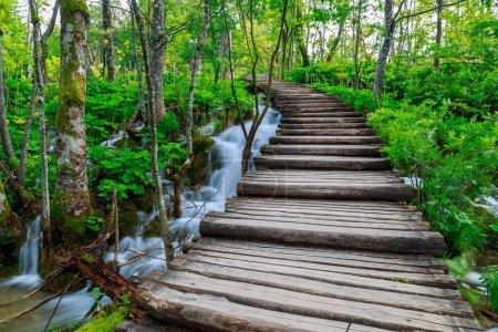 Photo pour Sentier de forêt l'été dans le parc national de plitvice-Croatie - image libre de droit