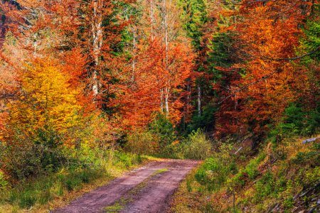 Photo for Footpath winding through colorful forest in Transylvania-Romania - Royalty Free Image