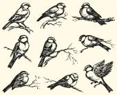 Vector freehand drawing Tits sparrows and bullfinches on branc