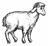Little cute beautiful sheep standing in profile isolated on white background Vector monochrome freehand sketchy linear drawn picture in style of book engraving