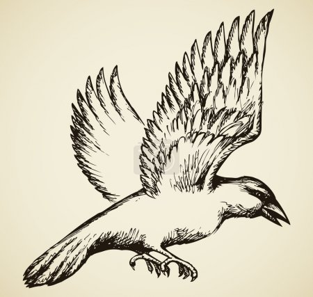 Crow in flight. Vector sketch