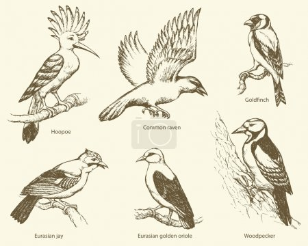 Vector set of birds: crow, hoopoe, oriole, woodpecker, jay, gold