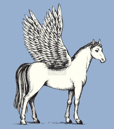 Pegasus. Vector drawing