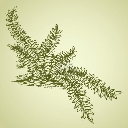 Fern. Vector drawing