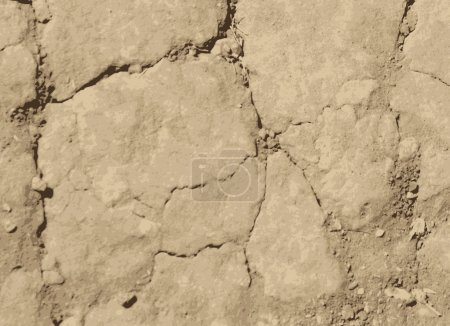 Dried cracked soil. Vector texture