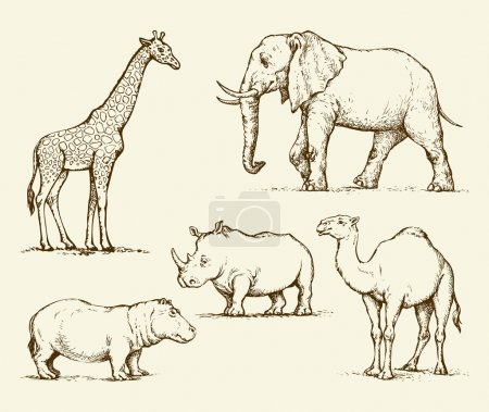 African animals. Vector drawing