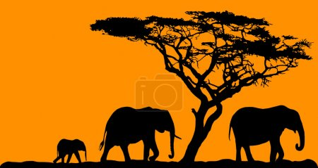 Three elephants and a tree on sunset background