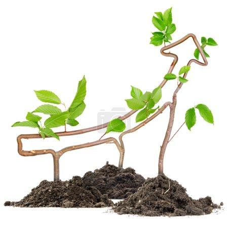 Photo pour Plantes poussant à partir de tas de sol formant une flèche pointant vers le haut - image libre de droit
