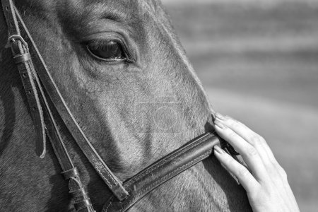 Tenderness. Woman stroking the horse's head, Black and White