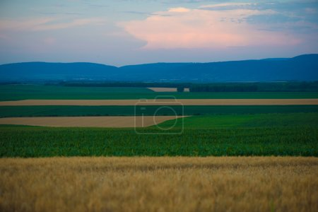 Photo for Sunset over agricultural land - Royalty Free Image