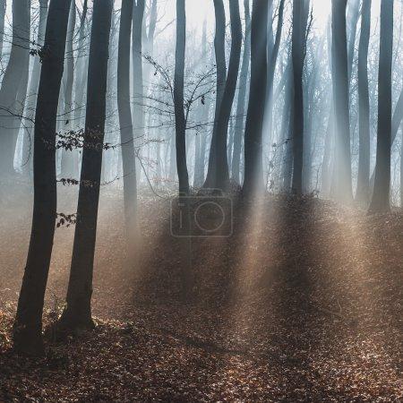 Dark dreamy forest with fog