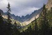 Vysoké hory a borovic