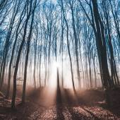 Forest with sun rays and long shadows