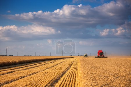 Combine harvester agriculture machine harvesting golden ripe whe