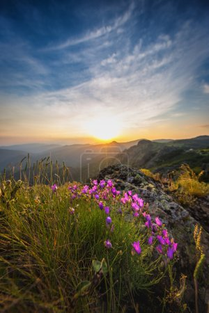 Spring landscape in mountains with flower
