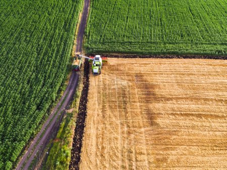 Photo for Aerial view of the combine working on the large wheat field - Royalty Free Image