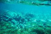 Underwater seabed reef background