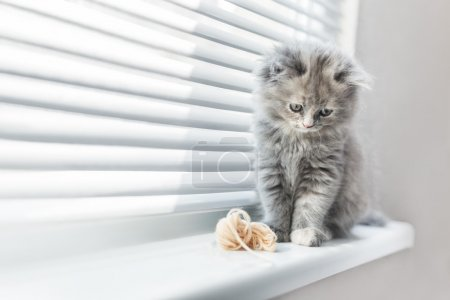 Cute grey tabby cat looking up with sweet look...