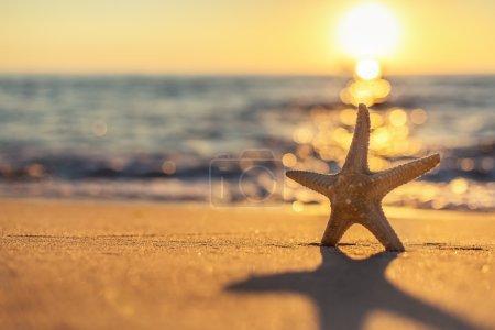 Photo pour Étoile de mer sur la plage au lever du soleil - image libre de droit