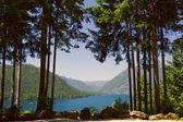 Lake Cushman in Summer
