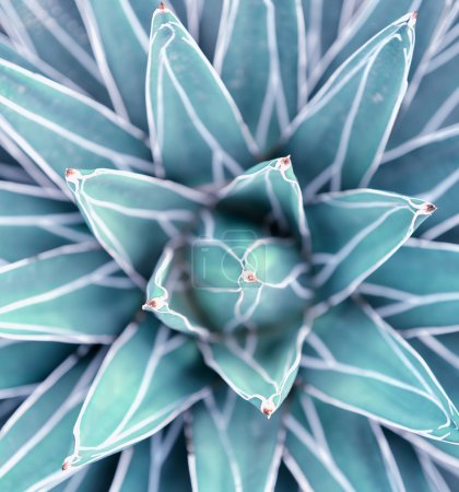 Photo for Cactus close up - Royalty Free Image