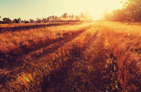 Farm road in field
