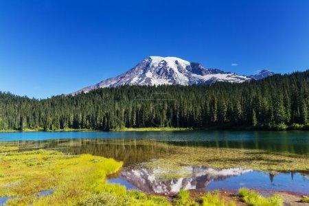 Photo pour Parc national du Mont rainier, washington - image libre de droit