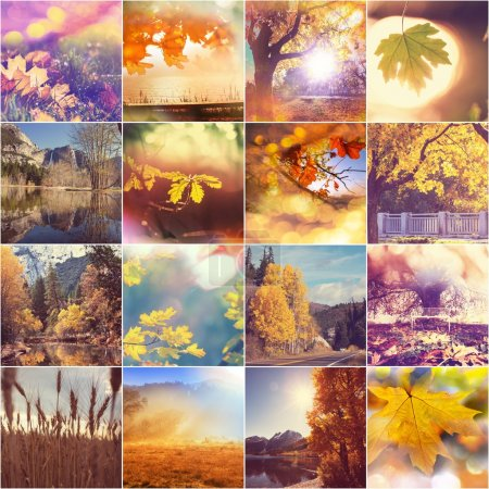 Photo for Autumn orange collage with nature scenes - Royalty Free Image