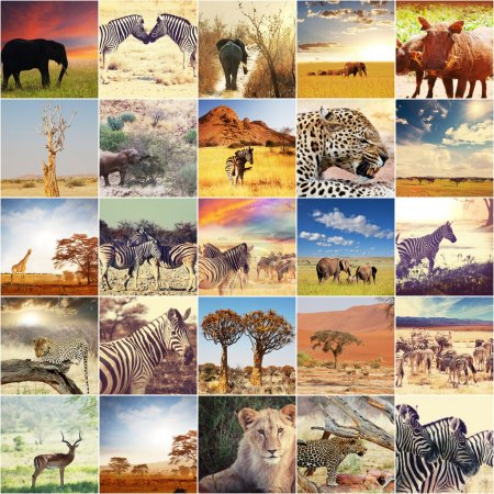 Photo pour Collages de photos de safari africain - image libre de droit