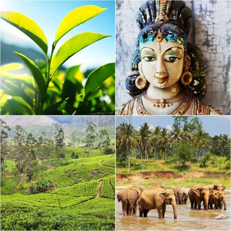 Photo for Sri Lanka travel collage - Royalty Free Image