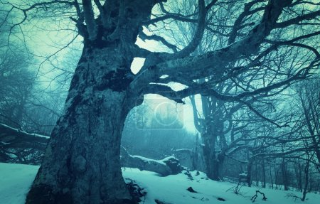 Photo for Magic mist in winter snowy  forest - Royalty Free Image