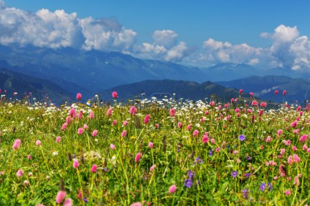 Mountains meadow with wild flowers