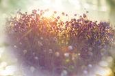 """Постер, картина, фотообои """"Летние цветы на лугу"""""""