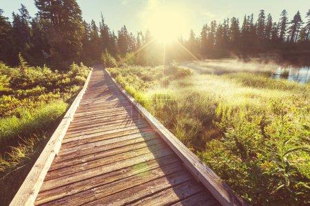 picturesque wooden Boardwalk