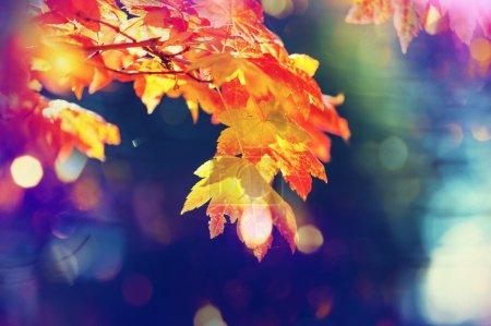 feuilles colorées en automne