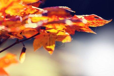 feuilles d'automne coloré