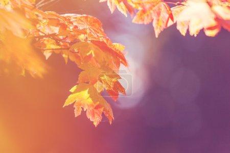 Photo pour Feuilles colorées en saison d'automne - image libre de droit
