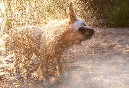 happy Retriever Dog