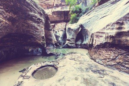Photo pour Étroits dans le parc national de Zion, Utah - image libre de droit