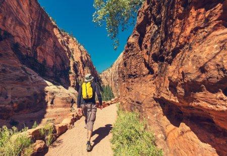 Photo pour Randonnée homme marchant dans le parc national de Zion - image libre de droit